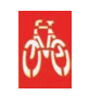 ley circulacion bicicletas